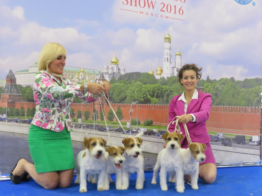 Whitetan Team at World Dog Show 2016 Mosca